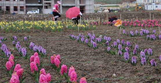 Siirt Üniversitesi Çiçekçiliği Geliştirecek