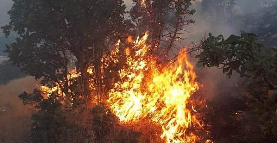 Baykan'da 3 Gündür Süren Orman Yangını, Güçlükle Söndürüldü