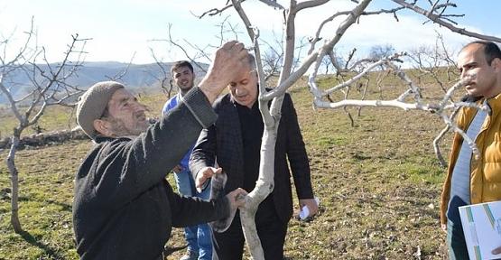 Alo Fıstık Hattı Sayesinde 20 Yıllık Fıstık Ağaçlarını Kurtardı
