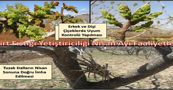 Siirt Tarım ve Orman İl Müdürlüğü Fıstıkçılık Biriminden Önemli Duyuru