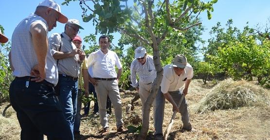 Siirt Fıstığı Bahçelerinde Görülen Sorunların Tespiti İçin Arazi Çalışmaları Devam Ediyor