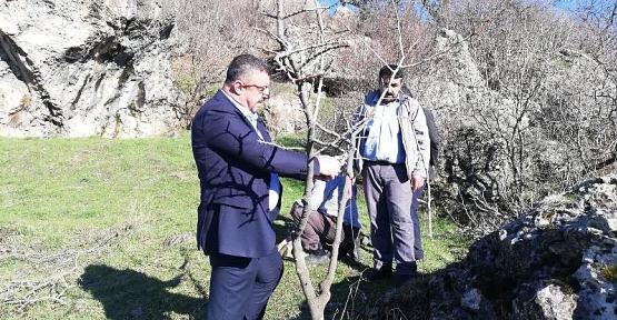 Şirvan İlçe Mezarlığında Bulunan Menengiç Ağaçları Fıstığa Dönüştürülüyor