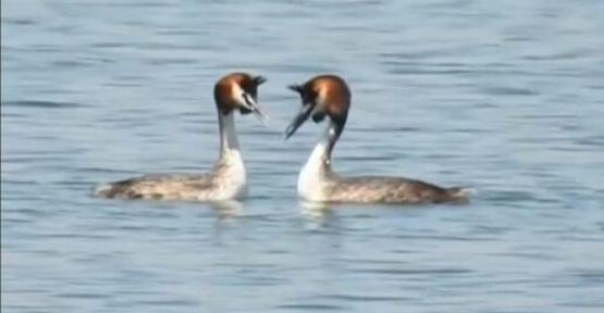 Ilısu Barajında Hayvan Çeşidi ve  Sayısı Artıyor