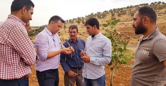 Şirvan İlçesinde ''Siirt Fıstığı Aşılama Eğitimi'' Yapıldı