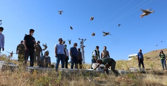Siirt/Şirvan İlçe Kırsalında 750 Adet Kınalı Keklik Doğaya Salındı