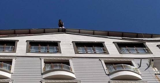 8 Katlı Binanın Çatısına Çıkarak İntihara Kalkışan Genç Kızı Polis Ekipleri Vazgeçirdi
