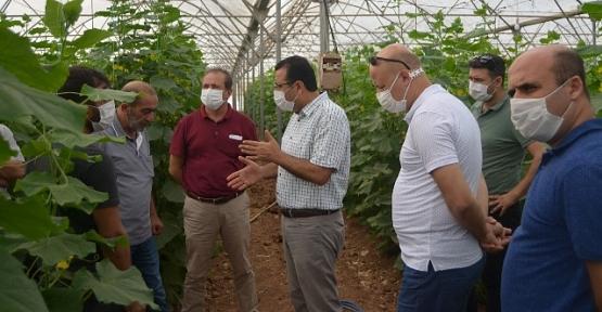 Tarım Müdürü Demirhan, İlimiz Seralarında İncelemeler Yaptı