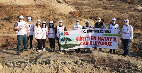 Siirt Belediyesi Ekipleri Hatay'da PKK'nın Yaktığı Ormanın Yaralarını Sardı