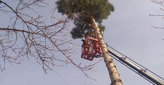 Ağaçta Mahsur Kalan Kedi 3 Saatlik Çalışmayla Kurtarıldı