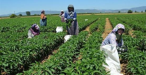 """Çiftçilerimizin ve Üreticilerimizin Dikkatine  """"Sokağa Çıkma Yasağı'' Döneminde Tarımsal Faaliyetler"""
