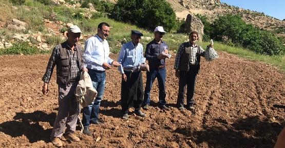 Siirt'te Geleneksel Susam Yetiştiriciliği Tekrar Canlandırılıyor
