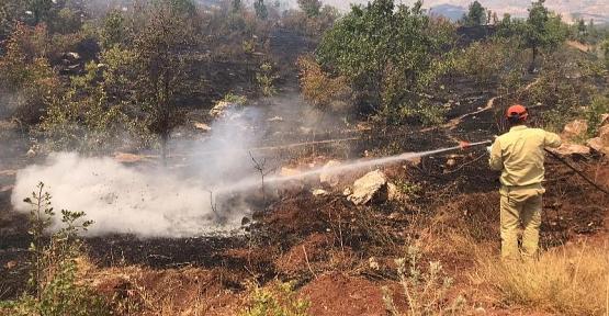 Siirt'te Çıkan Orman Yangınında 10 Hektarlık Alan Zarar Gördü