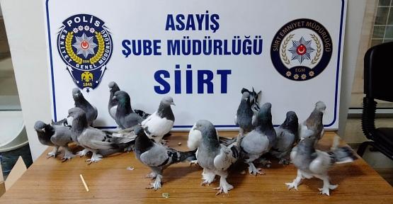 Siirt'te Güvercin Çalan Hırsız Yakalandı