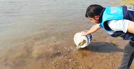 Siirt İlinde Bulunan Göl, Gölet ve Barajlara  1.486.000 Adet Pullu Sazan Bırakıldı