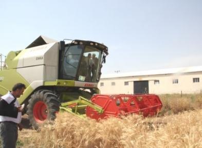 Arpa ve Buğday Hasadı Başladı