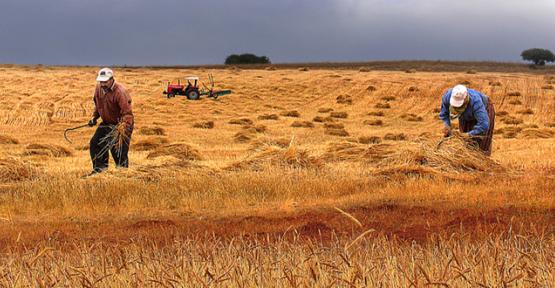 Tarıma Dayalı Yatırımlara Hibe Desteği