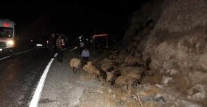 Koyun Taşıyan Kamyon Devrildi: 250...