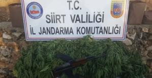 Kurtalan'da Kalaşnikof Silah ve Kenevir Bitkisi Ele Geçirildi