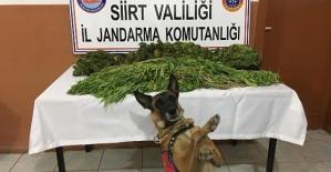 Jandarma'dan Zehir Tacirlerine Darbe