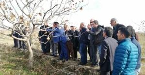 Çiftçilere Siirt Fıstığı Budama ve Gübreleme Eğitimi Verildi