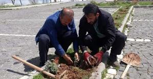 """""""Gelin Kardeş Olalım"""" Projesi Kapsamında Tillo Tabiat Parkında Lavanta Bahçesi Tesisi Kuruluyor"""