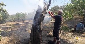 Siirt'te Fıstık Bahçelerinde Çıkan Yangında 200 Dönüm Alan Zarar Gördü