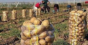 Siirt Üniversitesinde Patates Hasadı Yapıldı
