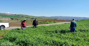 Tarım ve Orman İl Müdürlüğü Tarafından Fenolojik Gözlemler ve Saha Çalışmaları Yapıldı