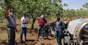 Siirt Tarım ve Orman İl Müdürlüğü Fıstıkçılık Birimi Arazi Çalışmaları Devam Ediyor