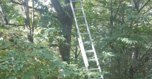 Şirvanda Ağaçtan Düşen Kişi...