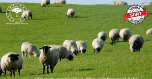 Hayvan Yetiştiricilerine Yem Bitkileri Tohumu Dağıtılacak