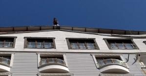 8 Katlı Binanın Çatısına Çıkarak...