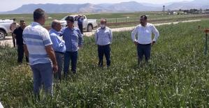 Siirt Tarım ve Orman İl Müdürü Demirhan, Kurtalan'da Arazilerde İncelemelerde Bulundu