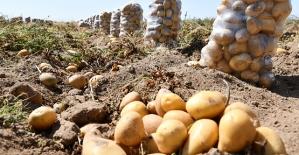 Bölgemizde Fiyatı En Fazla Artan Ürün Patates
