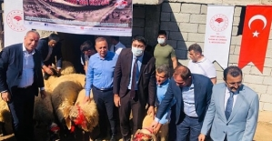 """""""Köyümde Yaşamak İçin Bir Sürü Nedenim Var"""" Projesi Kapsamında Pervari'de Koyun Dağıtıldı"""
