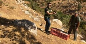 Siirt'te Bin 60 Sülün Doğaya Salındı