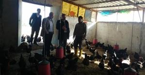 Genç Çiftçiden Tavuk Yetiştiriciliği