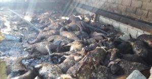 Ahırda Çıkan Yangında: 110 Koyun Telef Oldu
