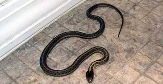 Yılanı Vurmaya Çalışırken Yengesini Yaraladı